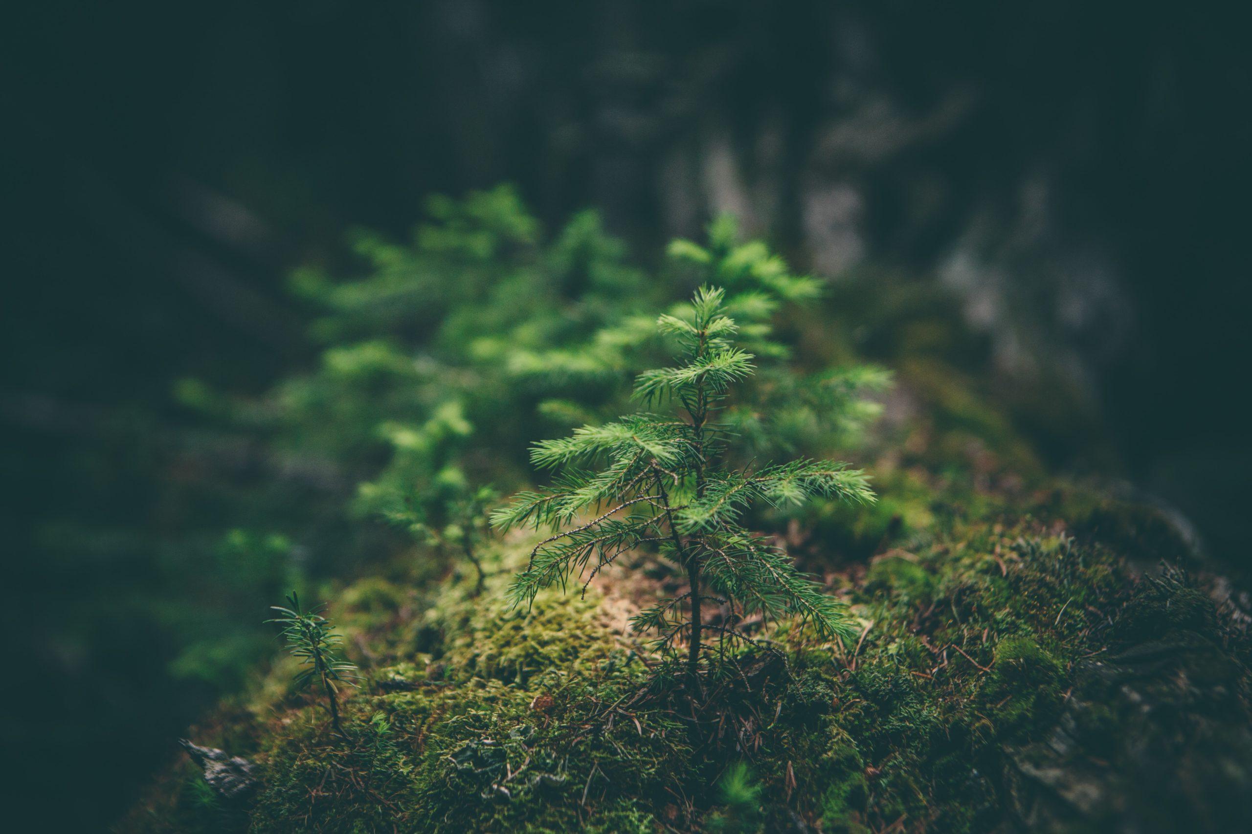 Día mundial del Medio Ambiente: todo lo que debes saber